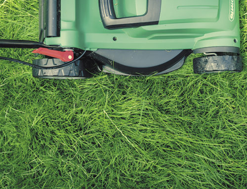 Karsten's Ace Hardware: Overseeding your Lawn