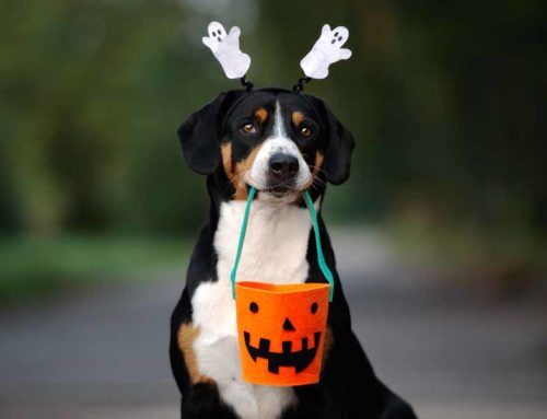 No Tricks, Only Treats  for Your Pets This Halloween!