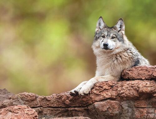 Wild Animal Rescue In Arizona