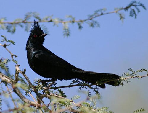 Bird Watching Takes Flight in Peoria this Winter