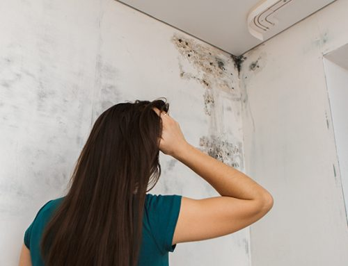 The Dangers of Toxic Mold on Your Health