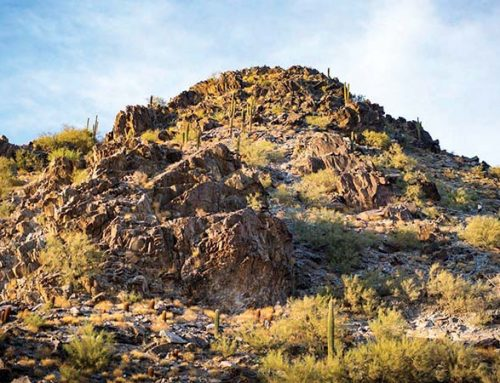 Fire Ban in Desert Parks and Preserves Now In Effect