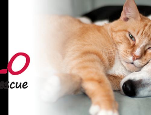 HALO Animal Rescue Celebrates 27 Years of Saving Animals' Lives